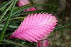 Kleine bloemen bij botanische tuin stock fotografie
