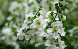Kleine bloemen bij botanische tuin stock foto