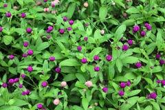 Kleine bloemen bij de weide Royalty-vrije Stock Foto's