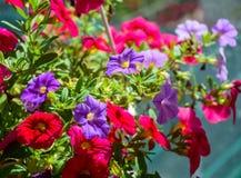 Kleine bloemen bij zonnige dag royalty-vrije stock foto's