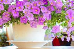 Kleine bloemen bij zonnige dag stock afbeeldingen