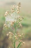 Kleine bloemen in de het ochtenddauw en spinneweb Stock Fotografie