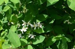 Kleine bloemen, gelijkend op vlinders royalty-vrije stock foto