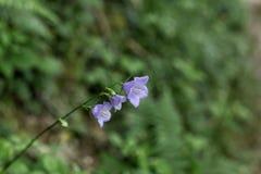 Kleine bloemen Italië Stock Afbeelding