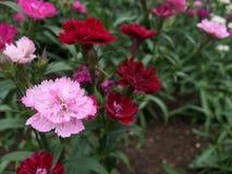 Kleine bloemen in keral, India Royalty-vrije Stock Fotografie