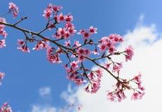 Kleine bloemen met tak stock afbeelding