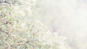 Kleine bloemen met zonnige uitstekende bloemenachtergrond Stock Fotografie