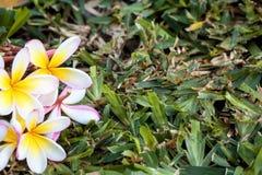Kleine bloemen voor decoratie en geur Tropische bloemen op B Stock Afbeeldingen