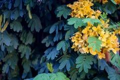 Kleine bloemen voor decoratie en geur Tropische bloemen op B Royalty-vrije Stock Foto's