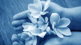 Kleine bloemen voor decoratie en geur Tropische bloemen op B Stock Afbeelding