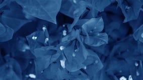 Kleine bloemen voor decoratie en geur Tropische bloemen op B Royalty-vrije Stock Afbeeldingen