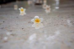 Kleine bloemen voor decoratie en geur Tropische bloemen op B Royalty-vrije Stock Fotografie