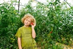 Kleine blonde Jungensammelntomaten im Garten Lizenzfreies Stockbild