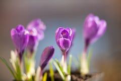 Kleine Blume der Blüte Stockbild