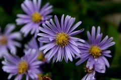 Kleine Blume in der Makrophotographie Lizenzfreie Stockbilder