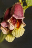 Kleine Blume in der Makrophotographie Lizenzfreie Stockfotografie