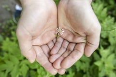 kleine Blume mit den weißen Blumenblättern liegt in der Palme eines Mannes im Wald Stockbilder