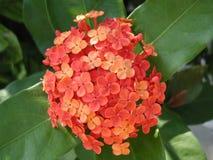 Kleine Blumen Lizenzfreies Stockfoto