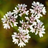 Kleine Blumen Lizenzfreie Stockfotos