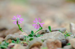 Kleine Blumen Stockbilder