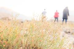 Kleine Blumen des wilden Rosas lizenzfreie stockfotografie