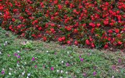 Kleine Blumen für Dekoration stockbild