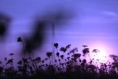 Kleine Blumen im Sonnenuntergang Lizenzfreies Stockfoto