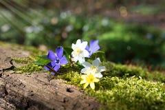 Kleine Blumen im Wald Stockfoto