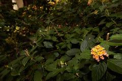 Kleine Blumen mit einem dunkelgrünen Hintergrund stockbilder