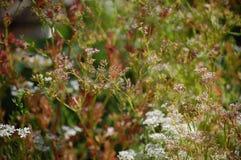 Kleine Blumen, Rosa und Weiß Stockbilder