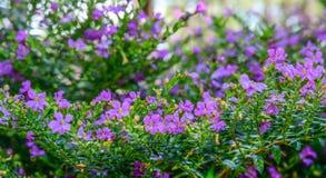 Kleine Blumen am sonnigen Tag lizenzfreie stockbilder