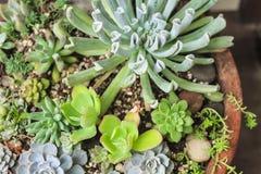 Kleine Blumen und Kaktusbäume einschließlich den Kiesstein lizenzfreies stockbild