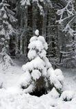 Kleine bont-boom gevallen in slaap door een sneeuw Stock Foto's