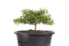 Kleine boom Royalty-vrije Stock Afbeelding