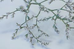 Kleine boom in bloei royalty-vrije stock foto