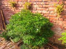 Kleine boom en mooie groene nactural royalty-vrije stock foto's