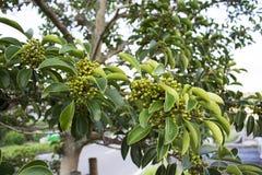 Kleine boom langs de weg in Japan Stock Fotografie