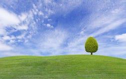 Kleine boom op groene grasheuvel Royalty-vrije Stock Afbeeldingen