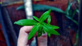 Kleine boom op hand Royalty-vrije Stock Afbeeldingen