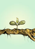 Kleine boom op hout Stock Fotografie