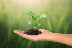 Kleine boom in vrouwelijke hand op groene aard Royalty-vrije Stock Foto's