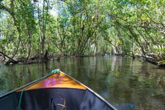 Kleine boot die op mangroven groen water varen stock afbeeldingen