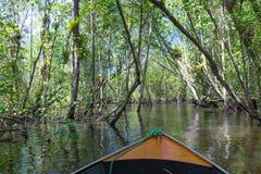 Kleine boot die op mangroven groen water varen royalty-vrije stock afbeeldingen