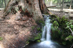 Kleine boskreek tegen reuzeSequoia stock foto