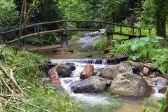 Kleine Brücke im Dschungel Stockfotografie