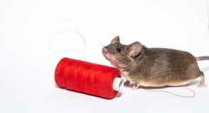 Kleine braune Maus Stockbild