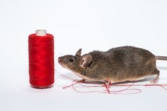 Kleine braune Maus mit Thread Stockfotografie