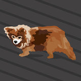 Kleine Bruine Hond Royalty-vrije Stock Afbeelding
