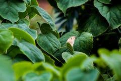 Kleine buterfly Royalty-vrije Stock Afbeelding