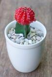 Kleine cactus Royalty-vrije Stock Afbeeldingen